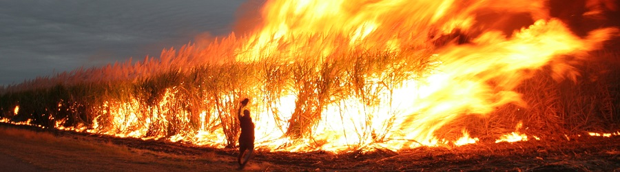 Cane_fire_in_Australia